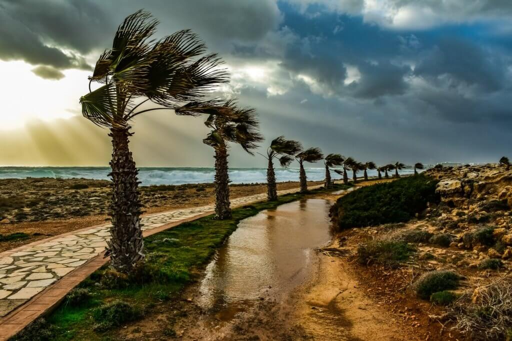 palm trees blowing in wind, pack for bad weather
