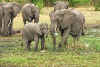1-Day animal kingdom, elephants