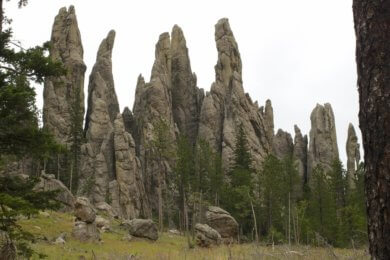 The Best Things to Do in the Black Hills with your Family featured by top US family travel blog, Travel with a Plan: image of needles highway