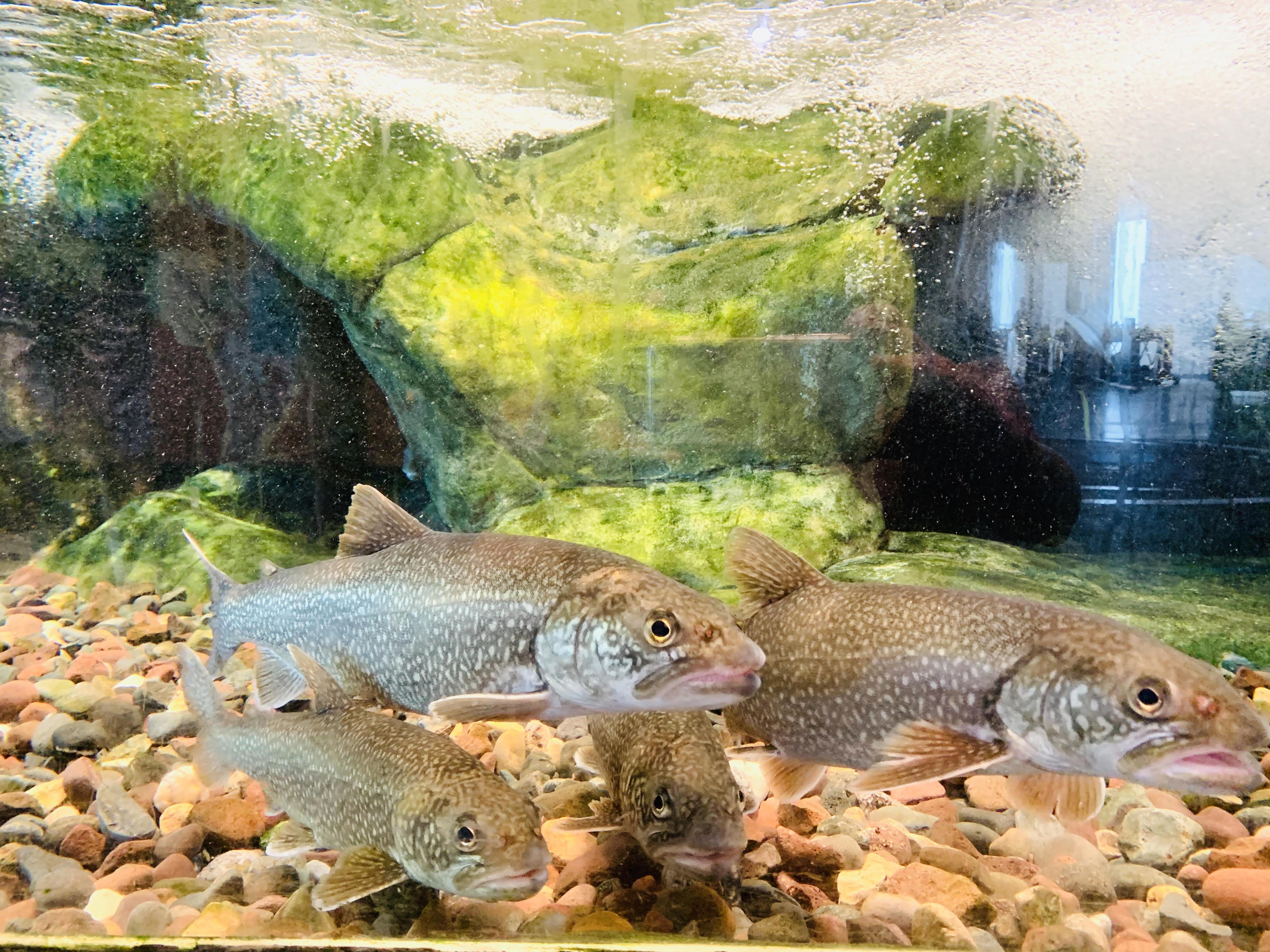 Greak Lakes Aquarium