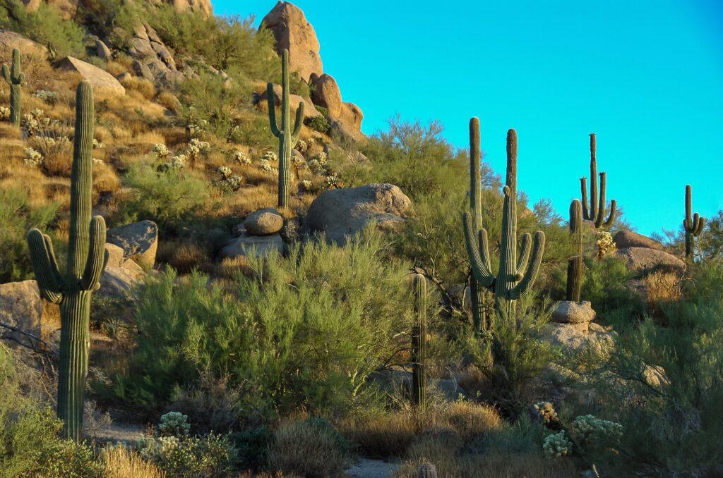 Scottsdale girls weekend scenery in the desert.