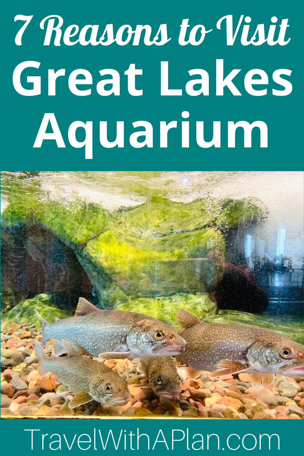Click here to discover 7 awesome reasons to visit Duluth's Great Lakes Aquarium from Minnesota natives and Top US Family Travel Blog, Travel With A Plan!