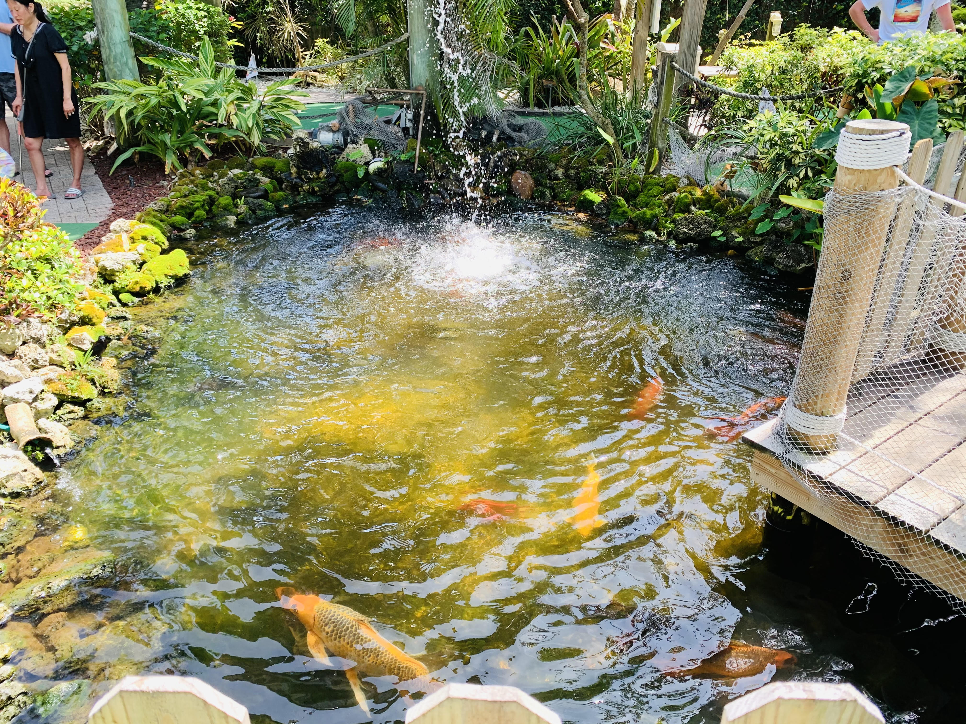 The Fish Hole Koi pond; Discover the best things to do on Anna Maria Island from Top US Family Travel Blog, Travel With A Plan!
