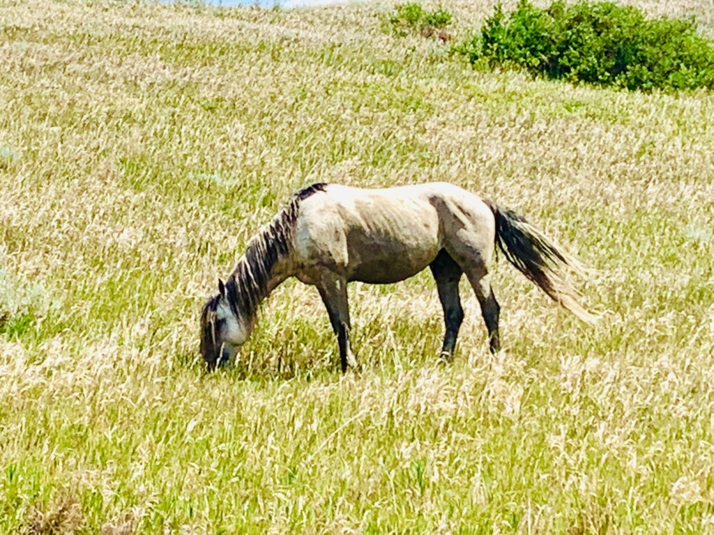 Wild horse at Theodore Roosevelt National Park